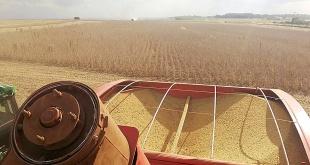 Las cosechas en Alto Paraná perderán cerca de 2 millones de toneladas.