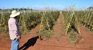 Elevadas temperaturas hicieron que se pierdan los cultivos.