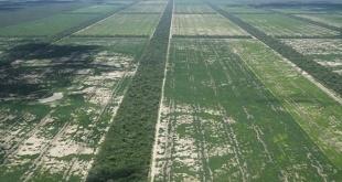 Imagen que comparte en sus redes sociales Guillermo Russo, para reflejar la salvaje deforestación.