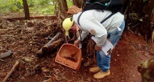 La eliminación de criaderos de mosquitos se debe extremar en épocas de lluvias.