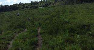 Camino interno de la Estancia Eucalipto, donde fue hallado sin vida el peón. / Gentileza