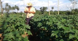Varias acciones se ejecutaron desde la cartera agropecuaria para la promoción de los rubros de renta.