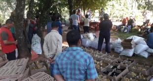 En la ocasión, fueron beneficiados productores de la compañía Mbyja Ko'ẽ del distrito de San Pedro del Paraná.