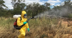 Un funcionario de la SENAVE fumiga la zona donde se denunció que había langostas, que en poco tiempo podría acabar con el cultivo.