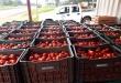 Técnicos de la Regional Alto Paraná del SENAVE, informaron que se contabilizaron 205 cajas de tomate ilegal, de 25 kilos cada una. Foto: SENAVE.