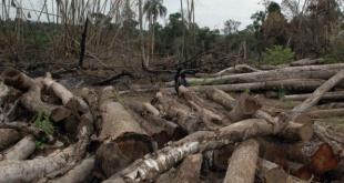 La destrucción de los bosques en nuestro país no para y es alarmante.