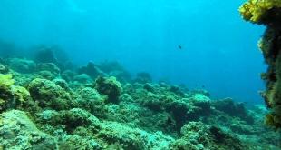 Gases de efecto invernadero suben a la atmósfera desde el lecho marino. Foto: ilustración.