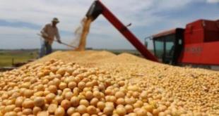 La soja sigue siendo el principal rubro de exportación de nuestro país.