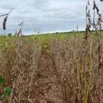 El año pintaba bien para la producción de soja pero ahora se teme no llegar ni a los 8 millones de toneladas