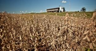 Enero marcó un tope importante en ingresos por la exportación de soja, pero los efectos de la sequía se encargarán de absorber el superávit.