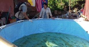 Los mosquitos ponen huevo en aguas estancadas y es un peligro para la salud de población.