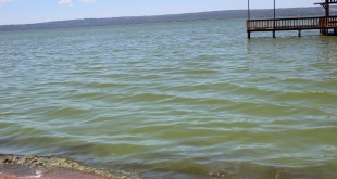 Reaparecen las cianobacterias en el lago Ypacaraí.