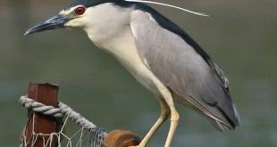 Las aves hicieron apariciones en barrios asuncenos.