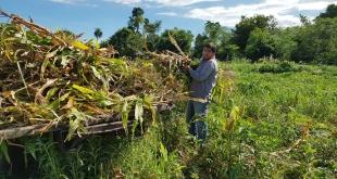 La jornada técnica se realizó en la finca del productor Elicer González Fernández, del comité de productores Sol Naciente; del asentamiento 7 de Diciembre, distrito de Tavaí.