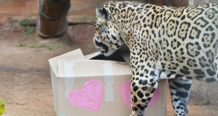Los animales festejaron la fecha del amor con un banquete muy especial.