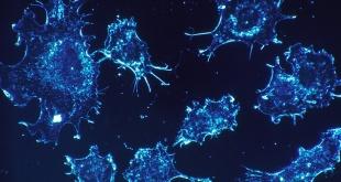 Científicos hallaron un mecanismo capaz de prevenir la mutación de las células del cuerpo.