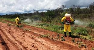 En algunas zonas de los departamentos de Alto  Paraguay y Boquerón, se detectaron focos de ataque con nuevas generaciones de insectos.