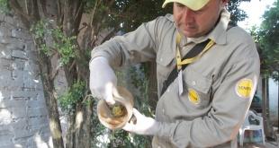 La eliminación de criaderos es la única forma de combatir al Aedes aegypti.