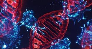 Investigadores han logrado desarrollar un nuevo tratamiento para inhibir un gen que causa, entre otros, el cáncer de pulmón más agresivo.