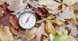 Alarm clock in retro style is on the ginger fallen leaves in the park