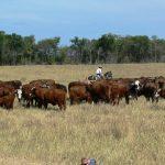 Peña: Lo que salvó al Paraguay en pandemia fue el sector agrícola ganadero