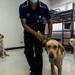 Una unidad móvil canina ayuda a detectar la covid-19 en Tailandia