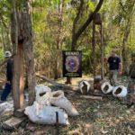 Desarticulan campamento narco y anulan más de 12 toneladas de marihuana